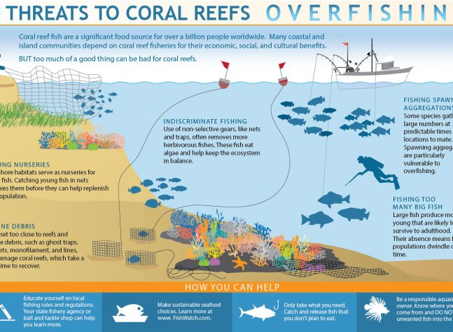 coral-overfishing